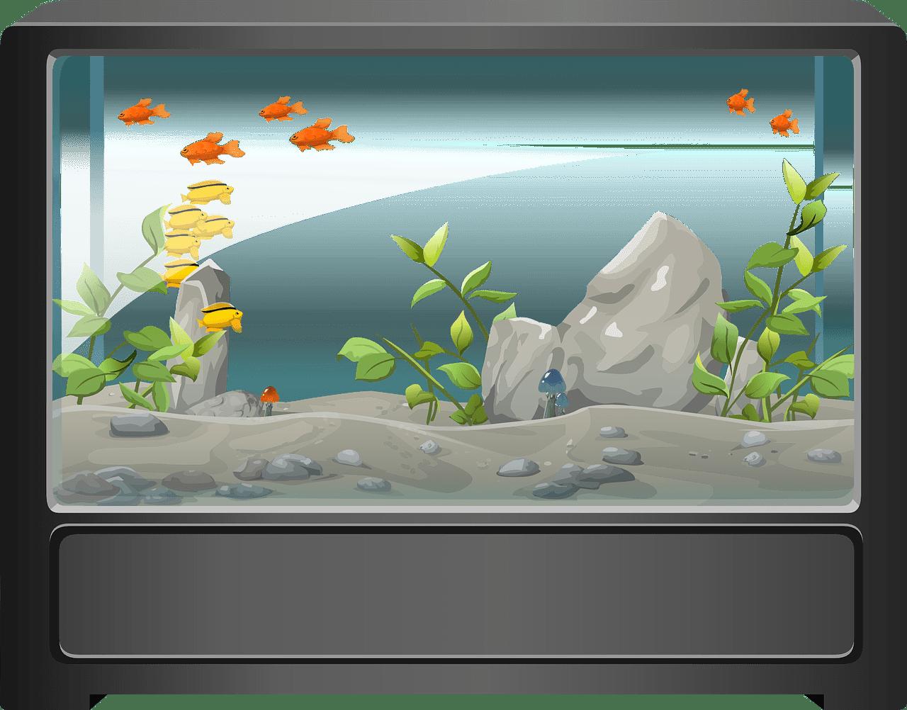 aquarium eau salée