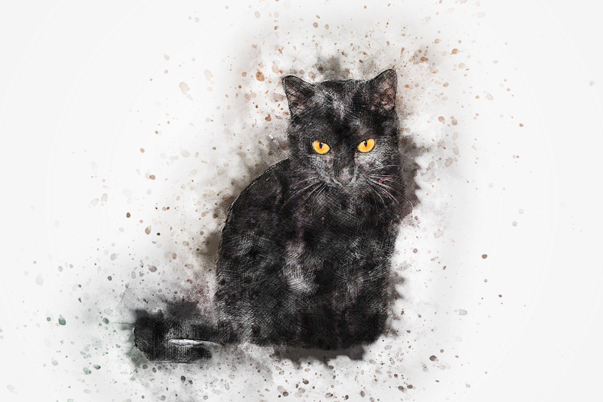 catégorie chat